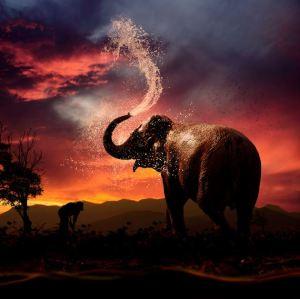 The-beautiful-elephant-sunset